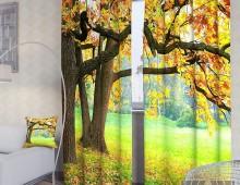 Фотошторы Осенний дуб